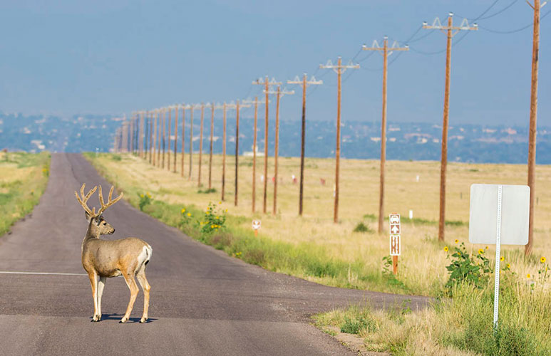 Deer at the Crossroads by Wayne Gortmaker
